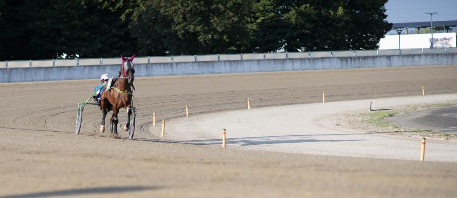 Cavalli in pista mercoledì a Vinovo, occhio ai puledri